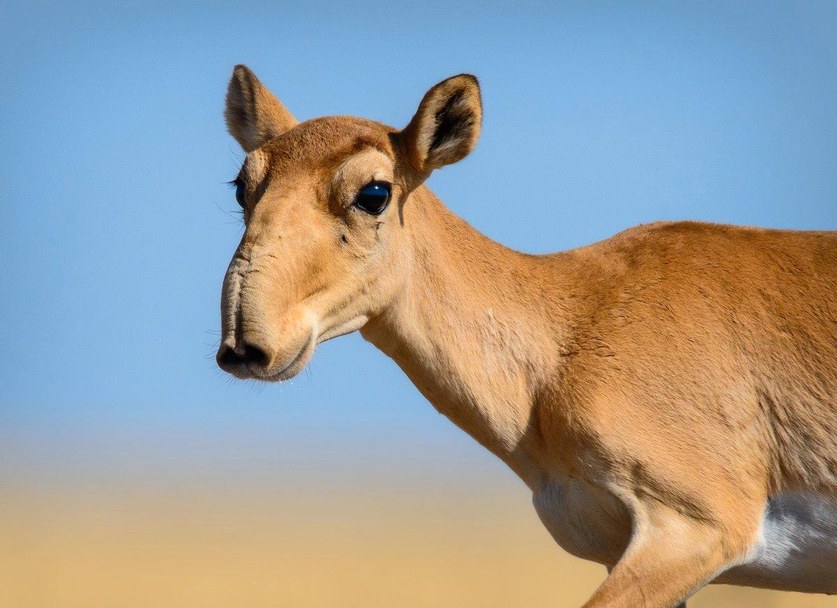 фотографии новых видов животных краткой информацией