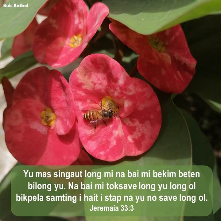 """""""Callto me and I will answer you and tell you great and unsearchablethings you do not know."""" ~ Jeremiah 33:3 ~ (NIV) #bukbaibel #bibleverse #godsword #holyscriptures #tokpisin #PapuaNewGuinea pic.twitter.com/LonKi85cxe"""