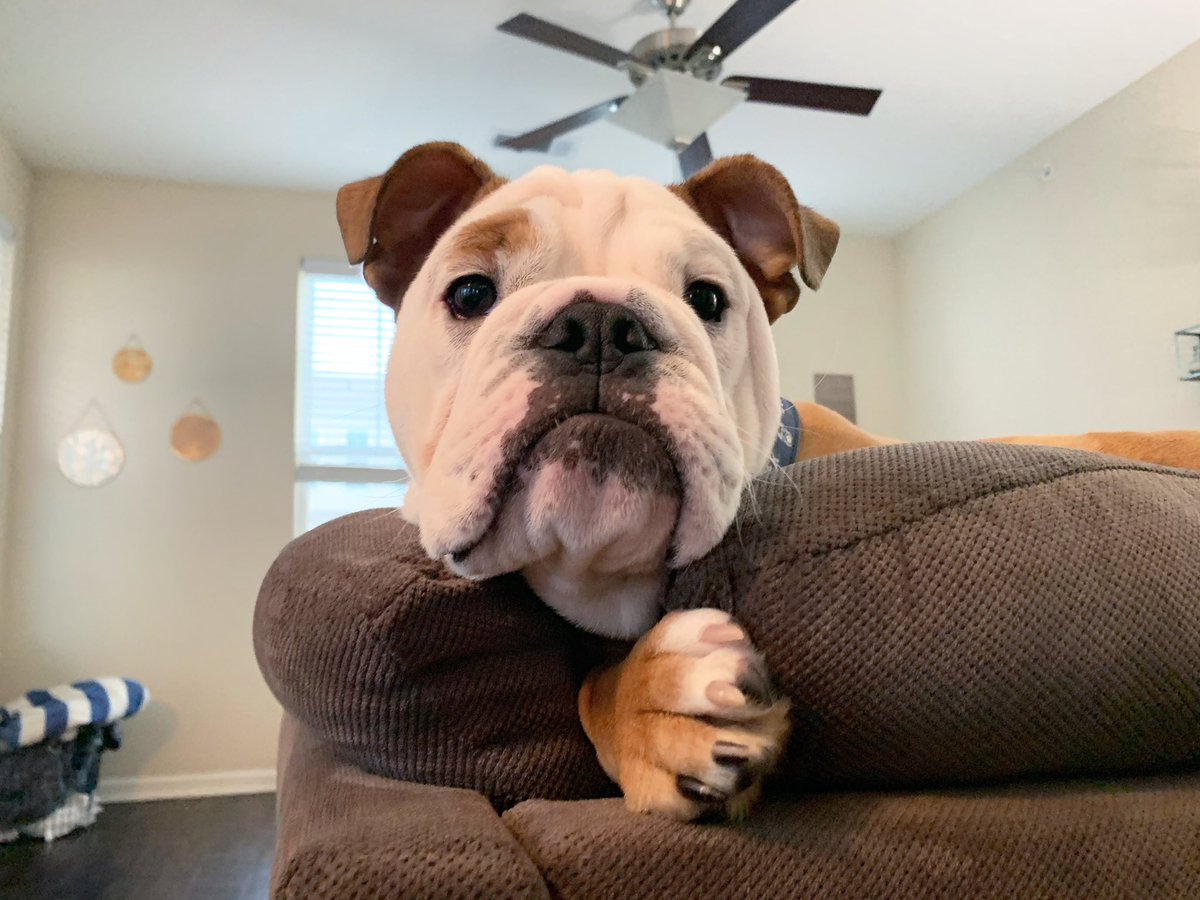Hey you! Don't forget Virtual Puppy Hours start at 9am. #GoDawgs youtu.be/s4iY5vqZi9I