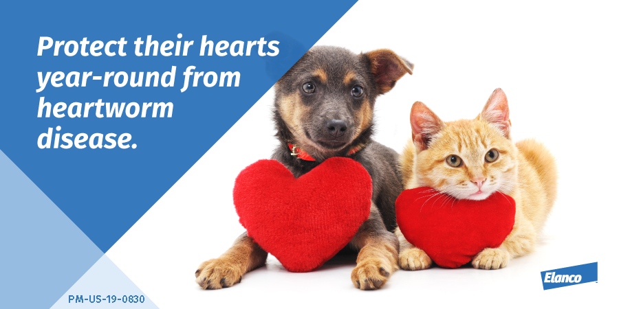 Elanco Auf Twitter Our Pets Love With Their Whole Heart So Why Not Protect It From Heartwormdisease Talk To Your Veterinarian To Find The Right Preventative For Your Pet Find Out More