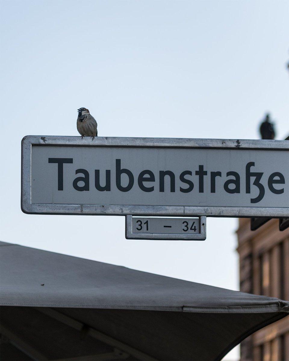 Protest #berlin pic.twitter.com/n6xPxpgO8j