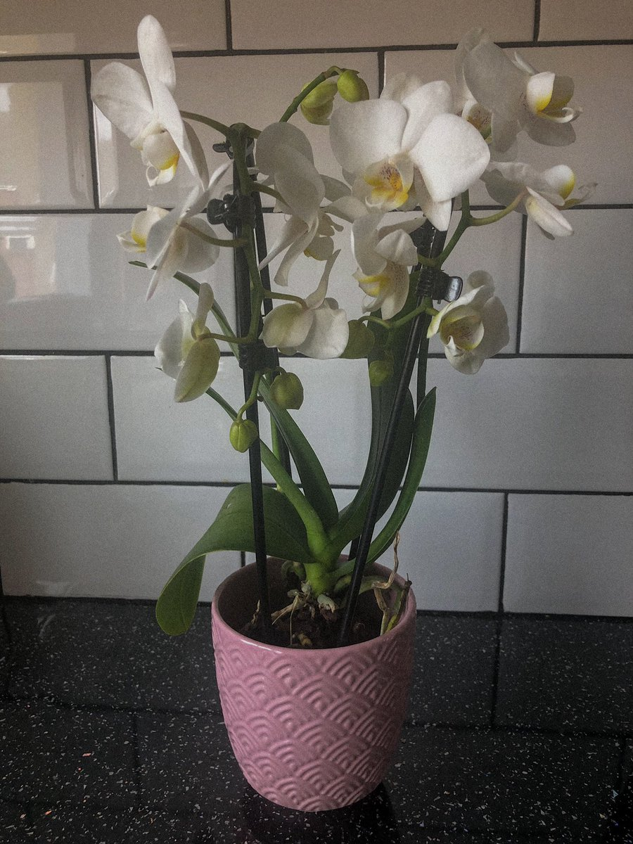 This is a happy picture of my orchid!