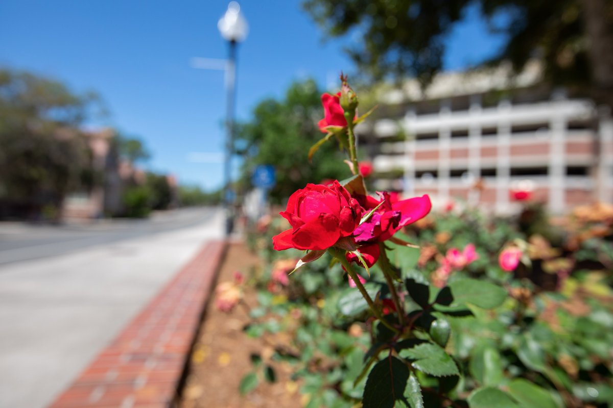 What's blooming on campus: 🌹🌻🌸🌼🌹🌻🌸🌼🌹 1st week of April edition 🌹🌻🌸🌼🌹🌻🌸🌼🌹