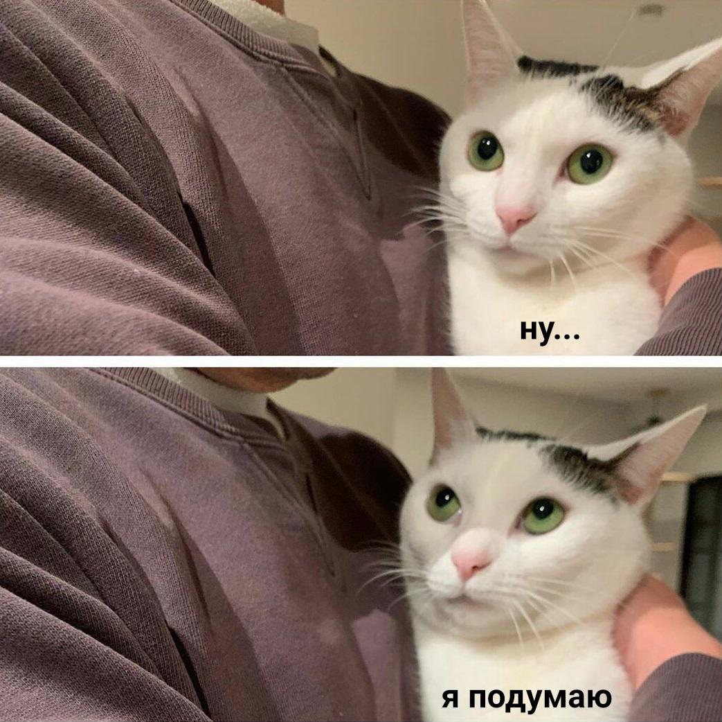 кот на картинке не беси меня этого, большинство