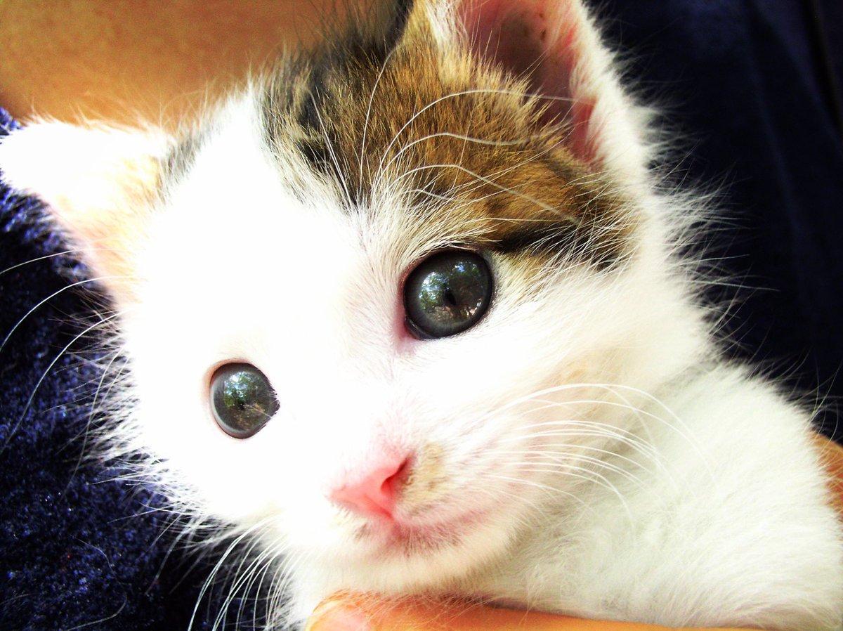 The cat has velvet eyes  #snapshot #cat #写真好きな人と繋がりたい #写真撮ってる人と繋がりたい #キリトリセカイ #ファインダー越しの私の世界 #東京写真部 #東京カメラ部 #pashadelicpic.twitter.com/APw1hUtnCp