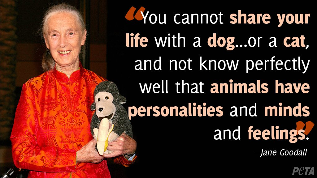 Jane Goodall may be famous for her work with primates, but she also uses her platform to speak up for other animals too ❤️🎉 Happy birthday @JaneGoodallInst—thanks for being such a fierce advocate for animals!
