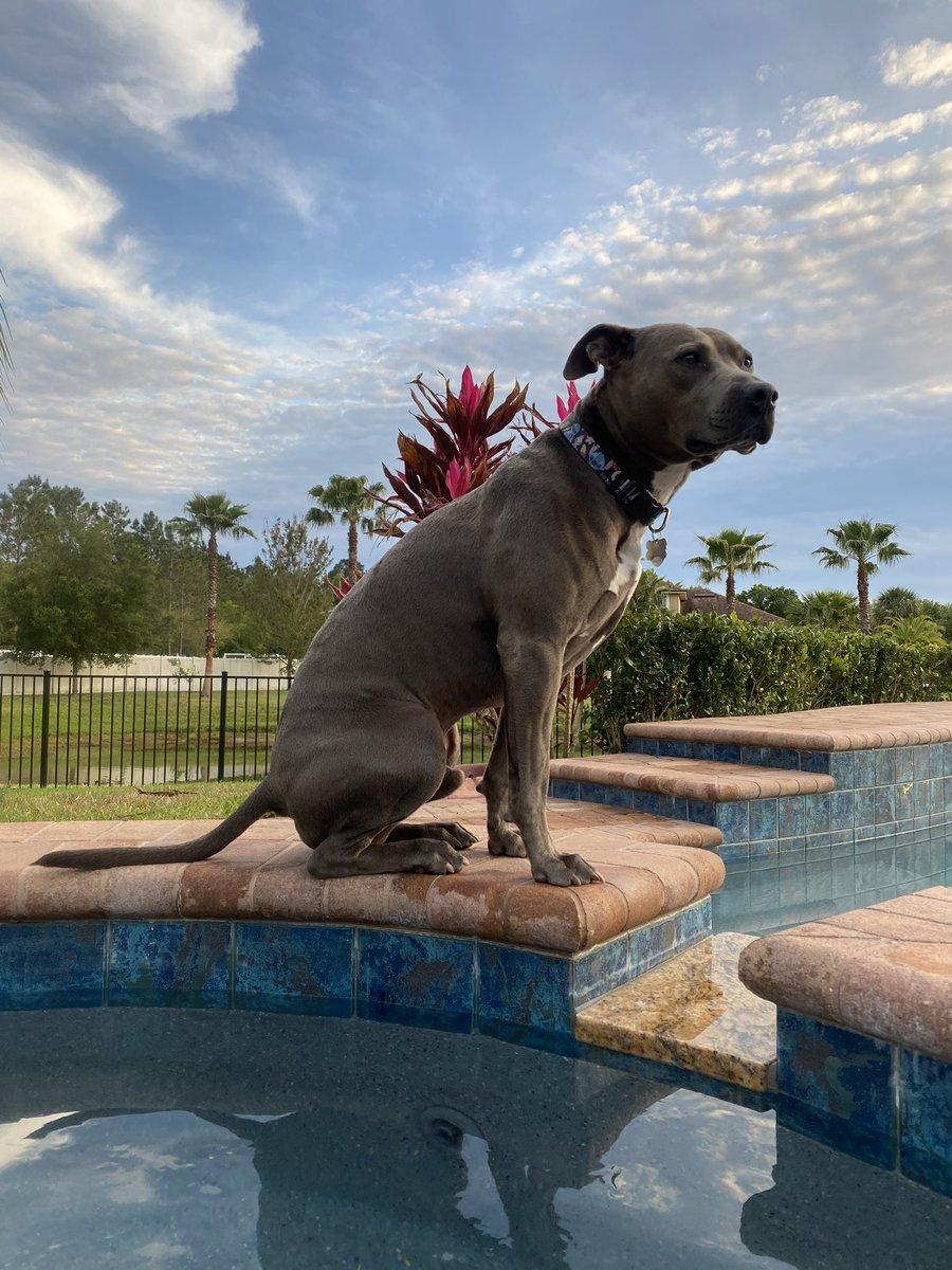Keeping watch and waiting for this to pass! #Maxwell #hugabull #standupforpits pic.twitter.com/gzGToh8zpT