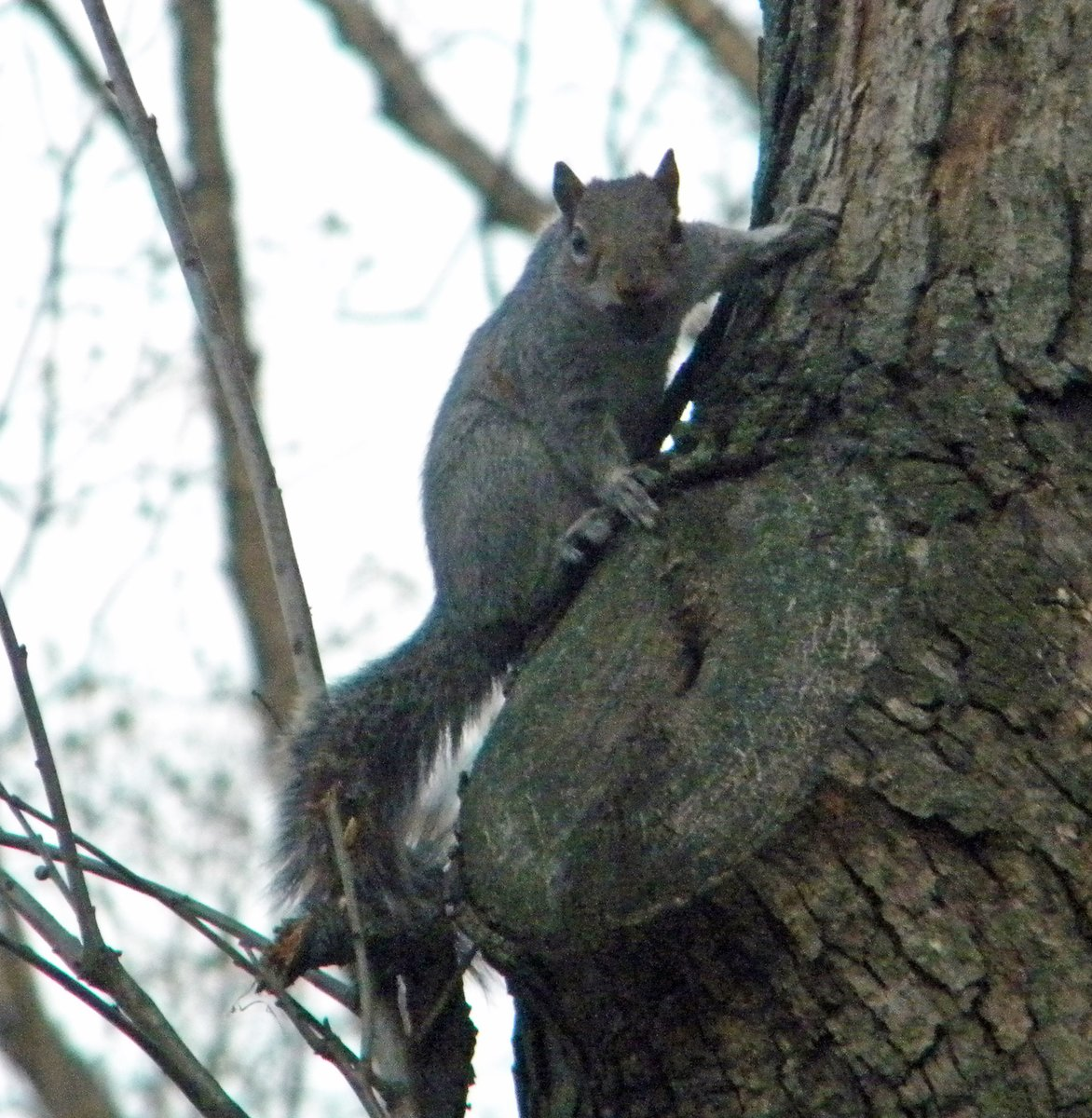 Squirrel of the day for April 3, 2020 has a bit of an attitude