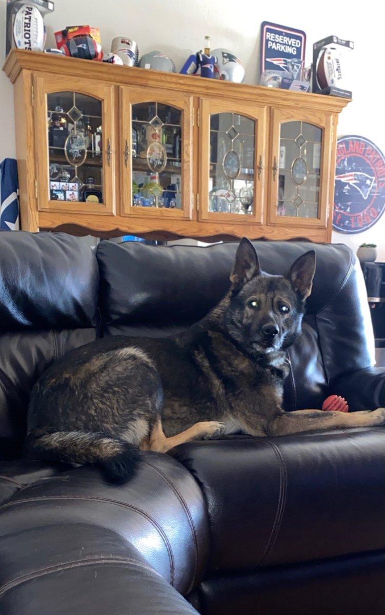Off duty dog.... #chillLife #indoorDog #weLoveDogspic.twitter.com/FyCKA8dDlY