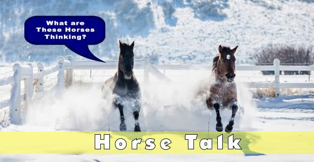 Enter the Blaze Kids #Captionthis contest: What are THESE Horses Thinking? Fill in the thought balloon and mail in your answer https://buff.ly/3dYB7Ab #horses #horsecrazy #horselover #ponyhour #4H #PonyClub #athomepic.twitter.com/qyna4oWtYT