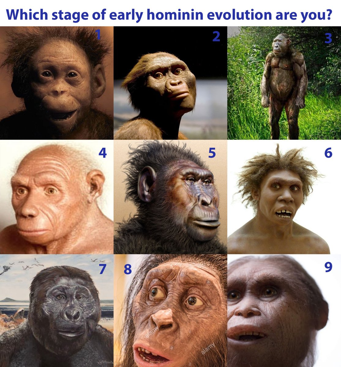 Which stage of early hominin evolution are you? @HumanOrigins
