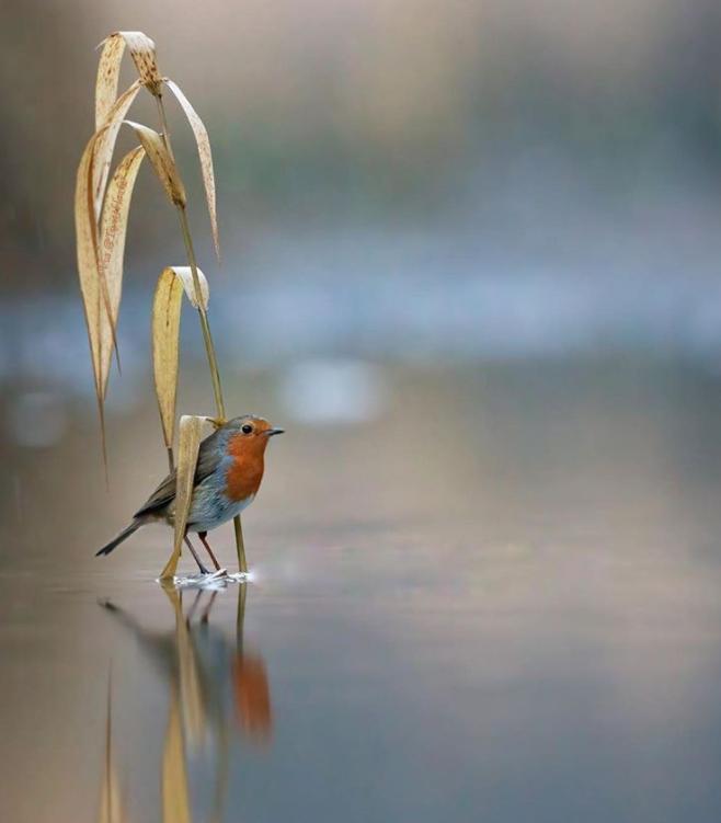 Silence is more musical  than any song. ~ Christina Rossetti  #Twittblaster #TwittblasterBirds #Birds #Lake #Beautiful #Silence #SilenceIsGolden #Stillness #Peaceful #SoulNourishment #Soul #Soulfulpic.twitter.com/rBGkDlmYdv