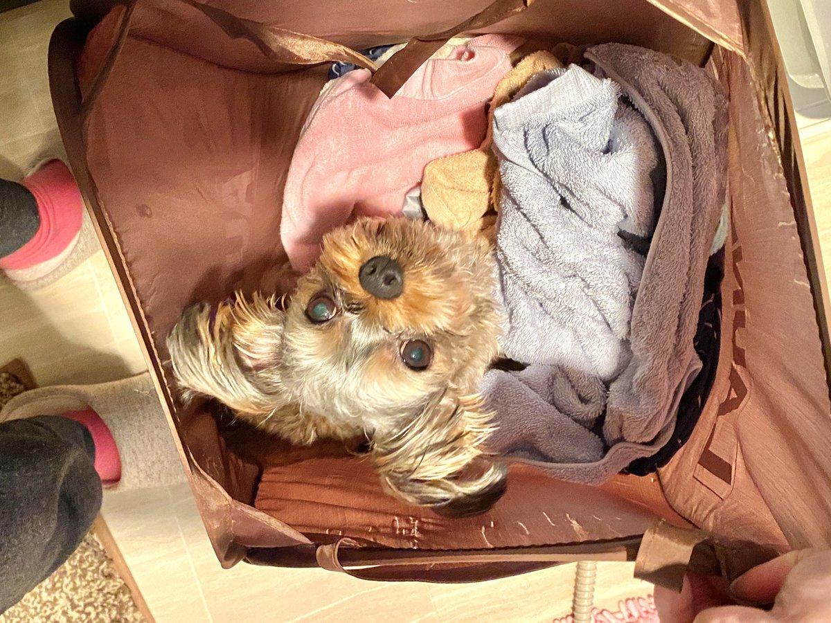 洗面所と洗濯物とぽんた  #ミックス犬 #犬のいる生活 #部屋とYシャツと私pic.twitter.com/mdubbIZ2Yj