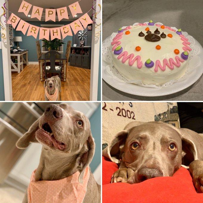 Happy Birthday to my 11yr girl Fergie!