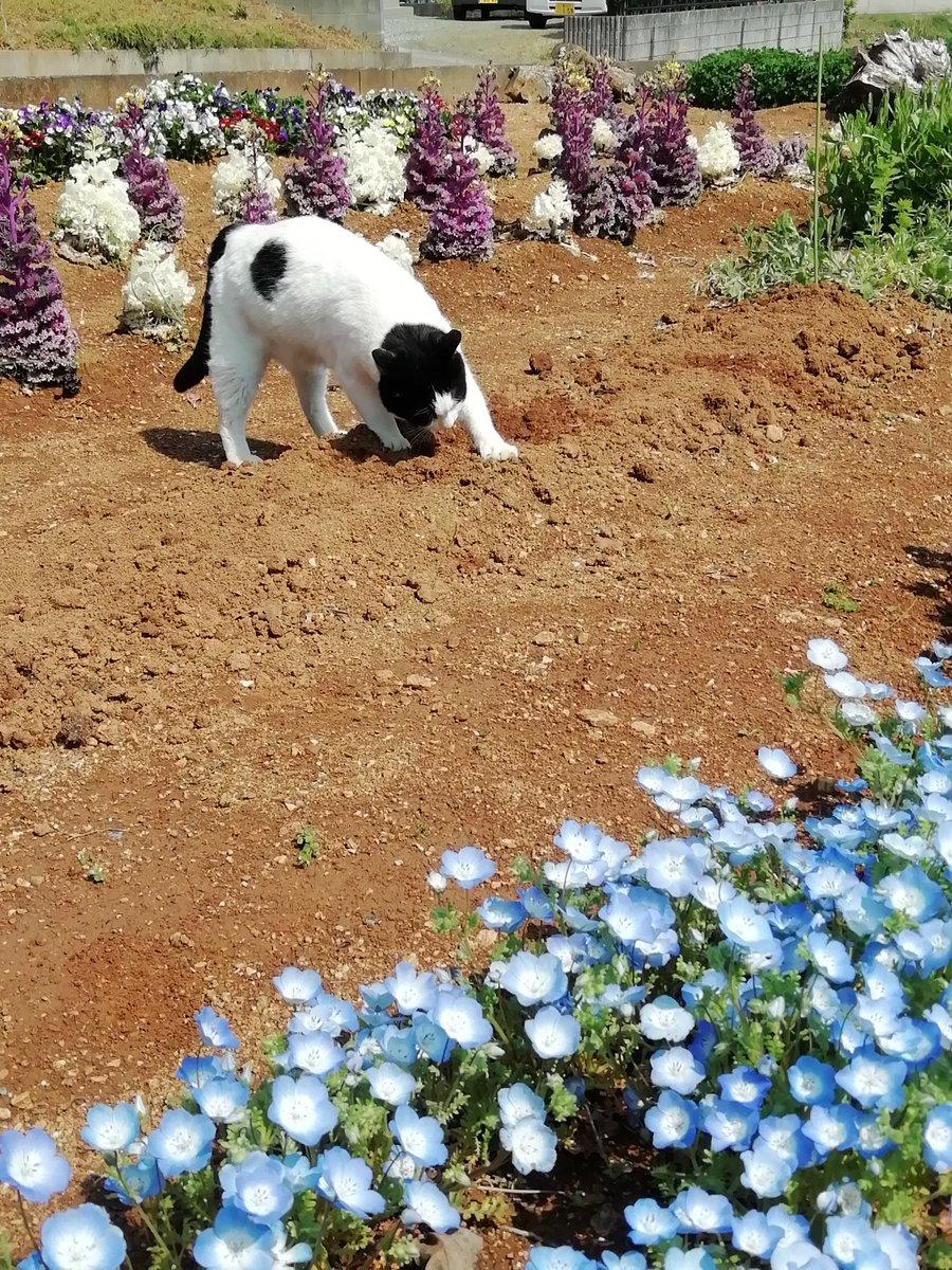 RT @ROkUHANA00: ステキな花壇をつくろと、タネをまいて 振り返ると、こうなっとる…… https://t.co/37yfQKrxgE