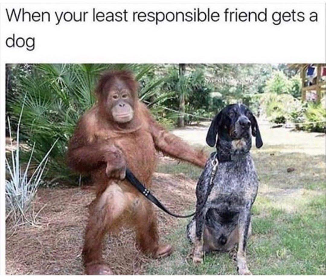 Mein Gedanke beim Thema Anschaffung eines Hundes.pic.twitter.com/sbNHBtQMWt