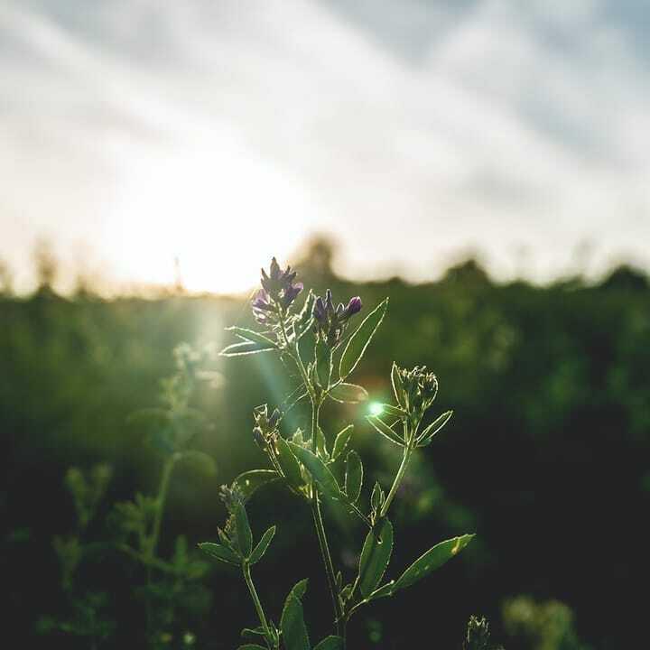 Good morning🙂  #amazing #beautiful #picoftheday #photooftheday #petal #flower #summer #flowers #flowermagic #floweroftheday #flowerstyles_gf #nature #bloom #plants #flowerstagram #botanical #love #spring #insta_pick_blossom #flowerslovers #blossom #petals #blooms #prilaga #f…