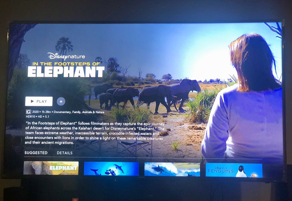 RT @Witchyyy7: This documentary made me feel every emotion. @disneyplus #elephant https://t.co/1Zxf9A0ZiL