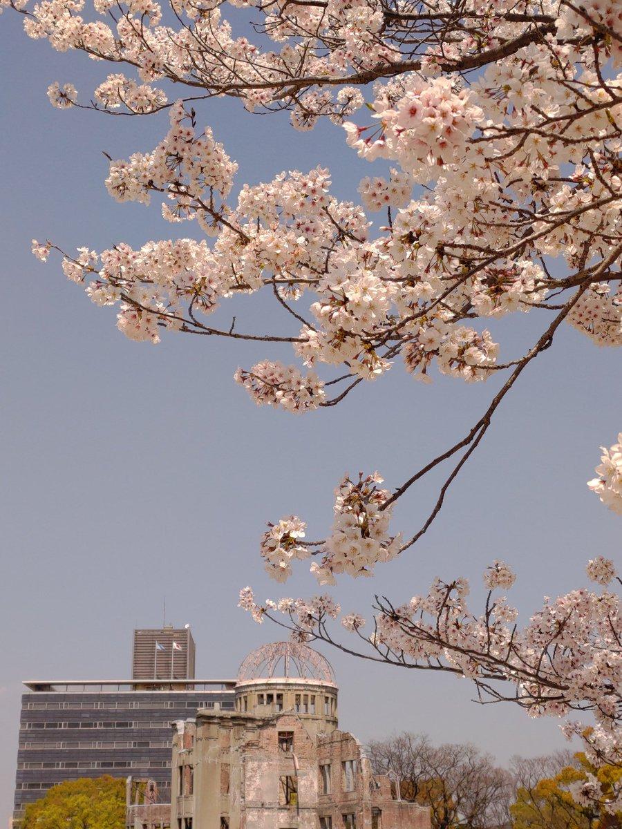 #ZenFoneで撮影した桜を愛でる会 Zenfone6で平和記念公園で撮影 標準カメラのプロモードで色温度変更pic.twitter.com/0e2WWrDJP9