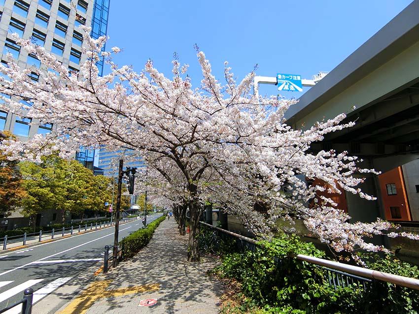 """টুইটারে 千代田遺産: """"桜(飯田橋・アイガーデンエアのガーデン ..."""