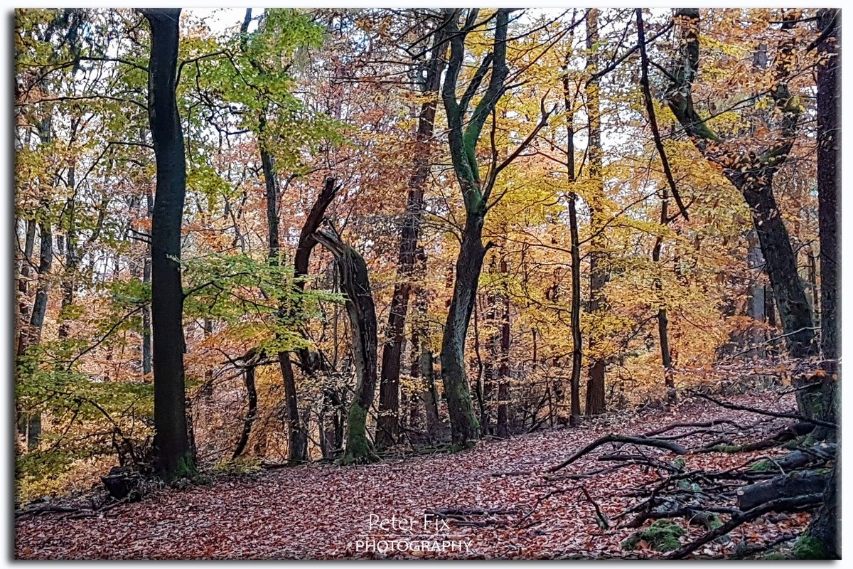 Out in the Woods  #landscapephotography #naturelovers #countryside  #nature #myphoto #forest #trees #photooftheday #staysavepic.twitter.com/JuBZfI3wYg