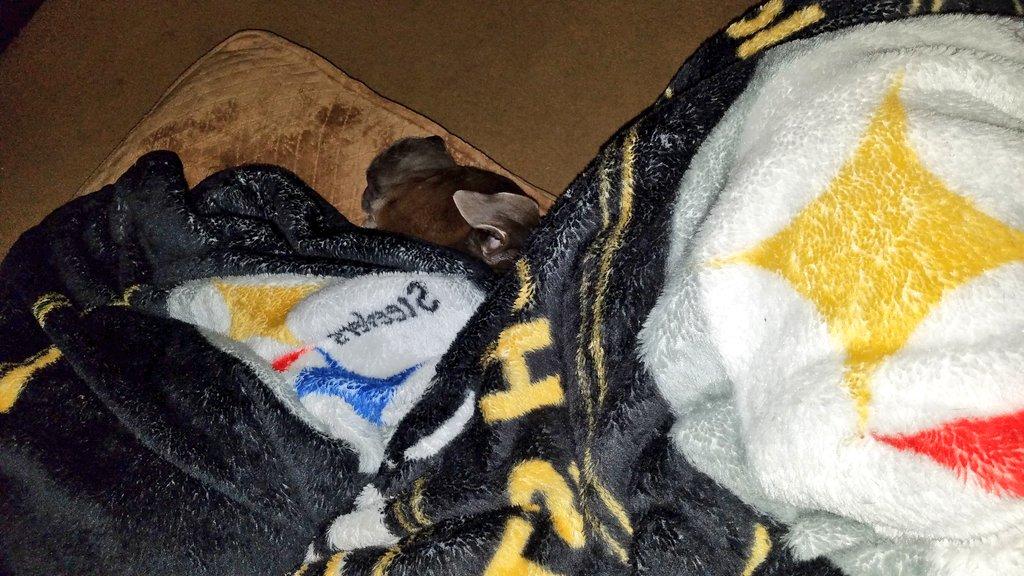 Good night friends, gave momma sad puppy eyes & now we're sharing comfy blanket. Works every time I love you all #tiredpup #sleepydog #snugasabug #fridaymood #pitbulls #bullmastiff #Staffordshire #steelers #doglife #doglove #sweetdreams #comfy #cozy #goodnightpic.twitter.com/GupjG9JUuj