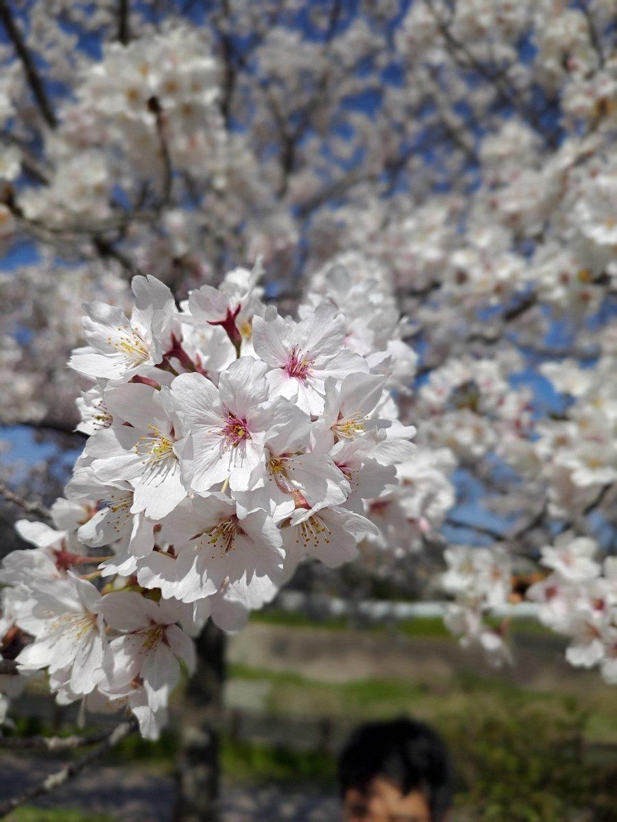 家の近くの公園で撮りました #ZenFone6 #ZenFoneで撮影した桜を愛でる会pic.twitter.com/wDqSZ5v1fz