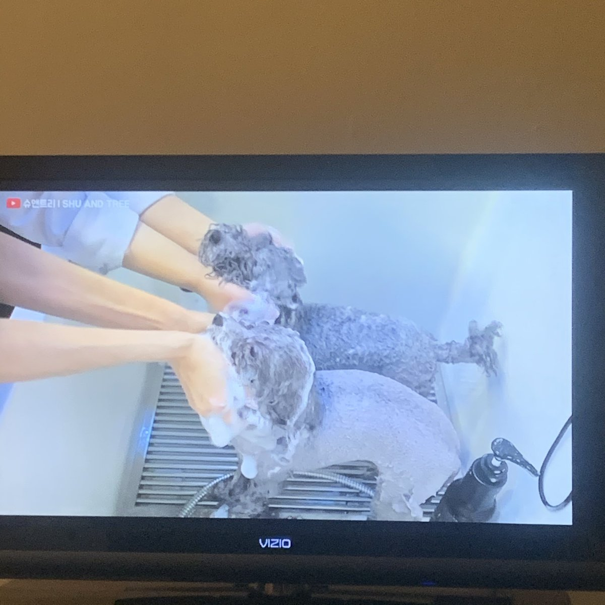 That's why I'm watching twin pups getting groomed pic.twitter.com/aLc1sYyMmG