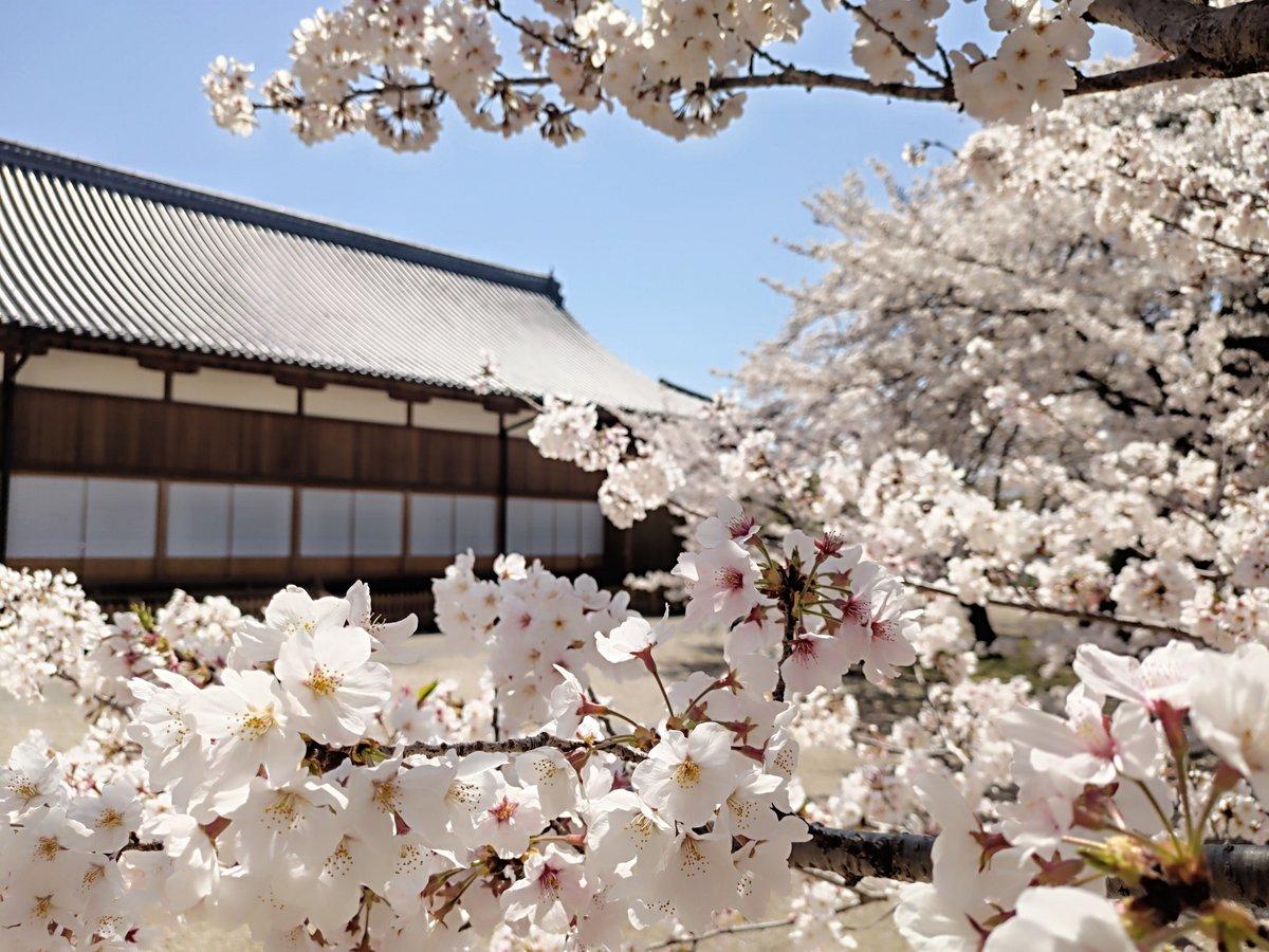 #散歩 #ZenFone6 #sakurapic.twitter.com/HwClVSctmo