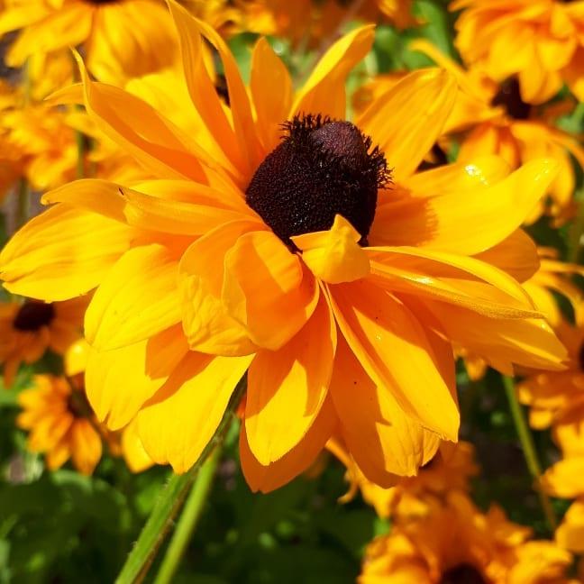 Good morning sunshine... Stay safe dear Twitter friends...  #photography #photooftheday #myartwork #PhotographyIsArt #photographyislife #flowerphotography #macrophotography #nature #NaturePhotography #StayHome #StaySafeStayHome #archivedimagepic.twitter.com/qEHOb0ghJy