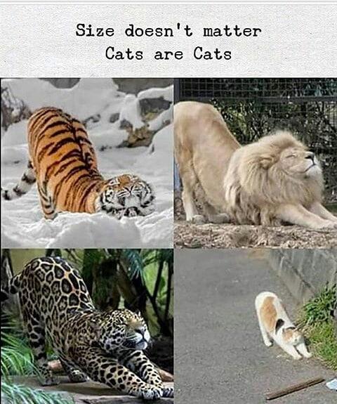 wOw 😍😍😍 . . . . #fun #memes #love #viral #funny #instagood #cute #tbt #photooftheday #life #girl #instadaily #like4like #follow #igdaily #bestoftheday #happy #followall #bff #motivation #shoutout #friend #friends #fun #followme #cats