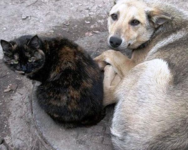 картинки фото привет от бездомного животного написанного показать