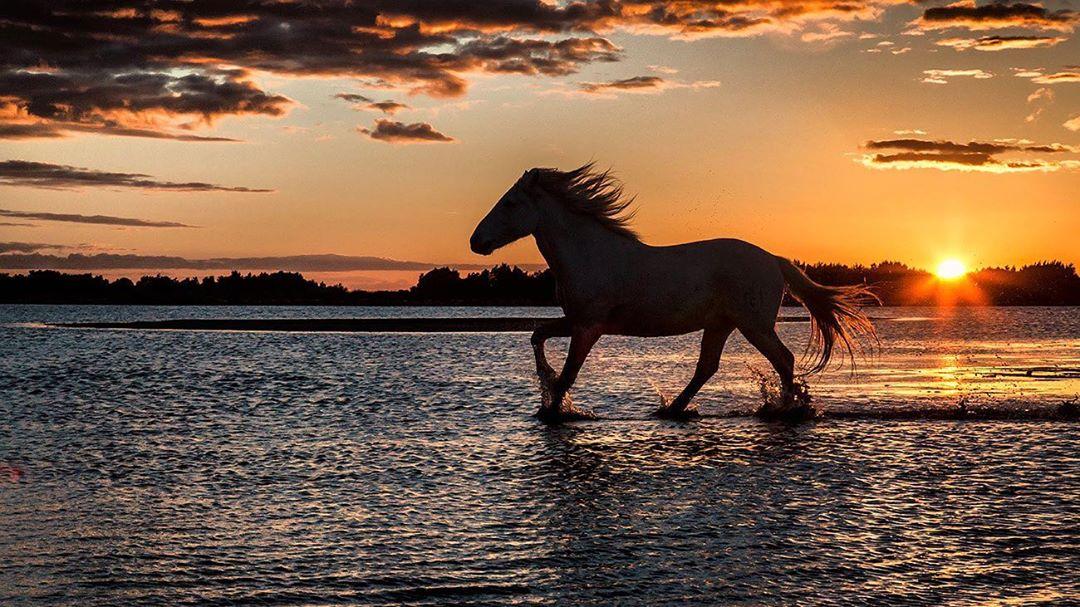 National Geographic Fine Art Galleries  #nature #travel #photography #natural #travelphotography #NaturePhotography #horse pic.twitter.com/Q5dmyu1WIJ