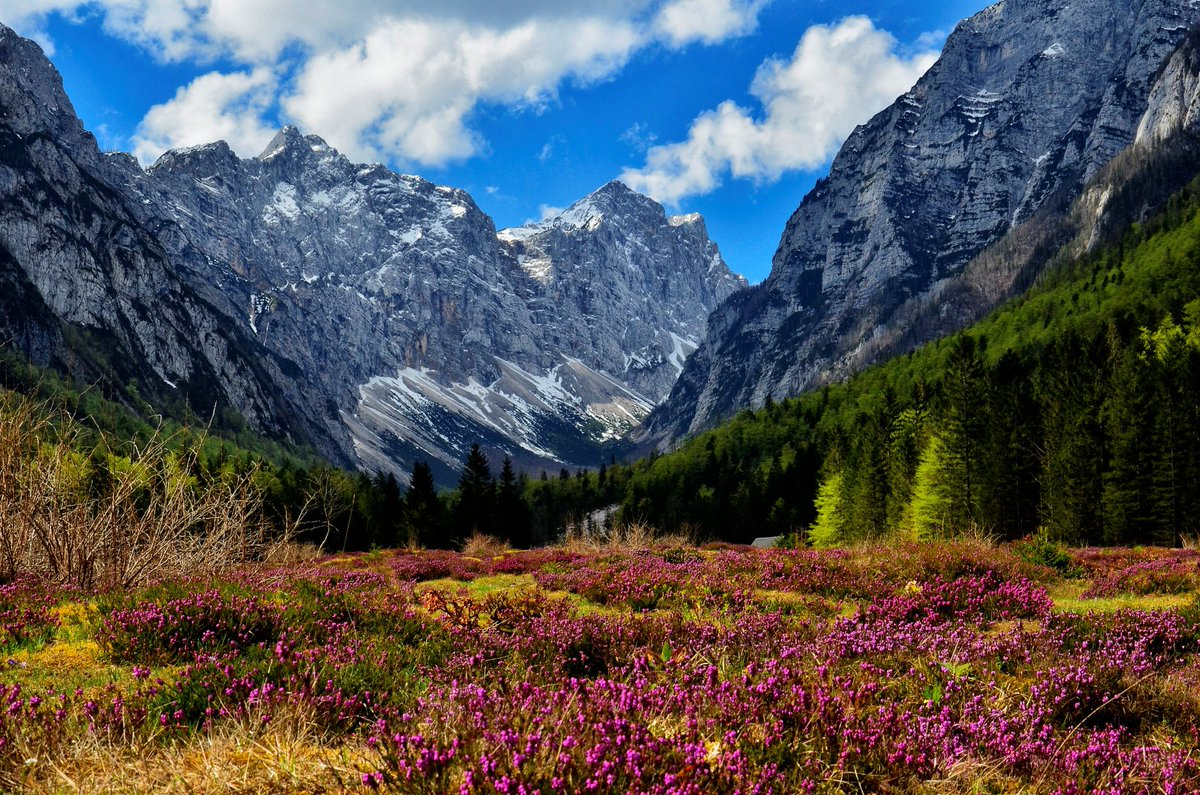 KRMA VALLEY, #Slovenia - this #mountain valley in the #Triglav #NationalPark is especially picturesque in #spring when #nature comes to life with all sorts of #flowers #blooming everywhere. (p: Bojan Kolman, Ales Krivec #photography) #Travel #landscape #ifeelsLOVEnia #mountainspic.twitter.com/YCv0lr6FEV