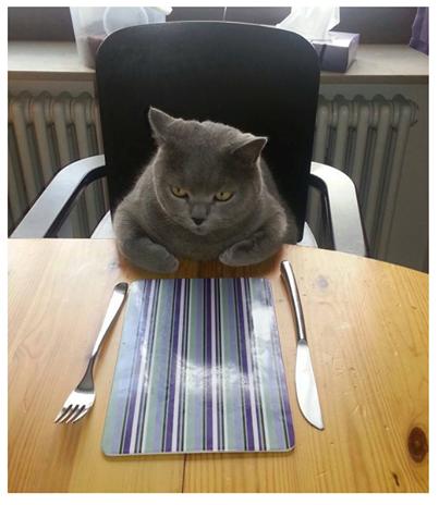 Bon, fini de rire, on mange quoi ? #chat #lolcat pic.twitter.com/DRRHynJmwx