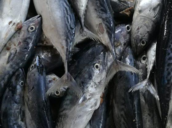 കൊല്ലത്ത് 2500 കിലോ കേടായ മത്സ്യം പിടിച്ചെടുത്തു നശിപ്പിച്ചു  http://prdlive.kerala.gov.in/news/76575  #KERALA #covid19 #covid19kerala #rottenfish #kollampic.twitter.com/ZY7JcTxuDC