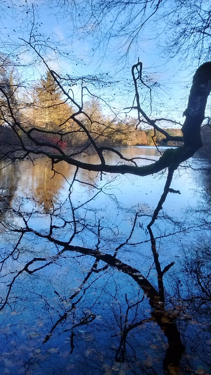 Beautiful nature #Trees #Nature #Lake pic.twitter.com/bQ2X3dRUan