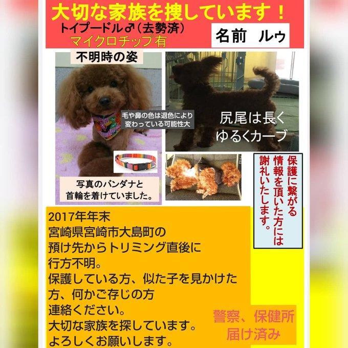 ダックスフンド ブリーダー 札幌