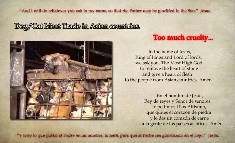 #BeKindToAnimals #AnimalsLivesMatter #AnimalRights #BeCrueltyFreepic.twitter.com/q3lzJ22GUz