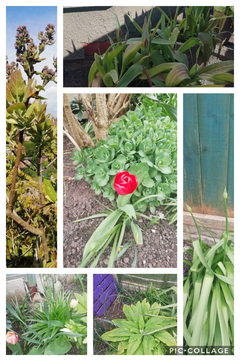 #sixonsaturday time to fill twitter with garden loveliness thanks to @cavershamjj  Tulips starting to sing, promise of alliums, lilac and self seeding foxgloves to come pic.twitter.com/K9vyzPx88L