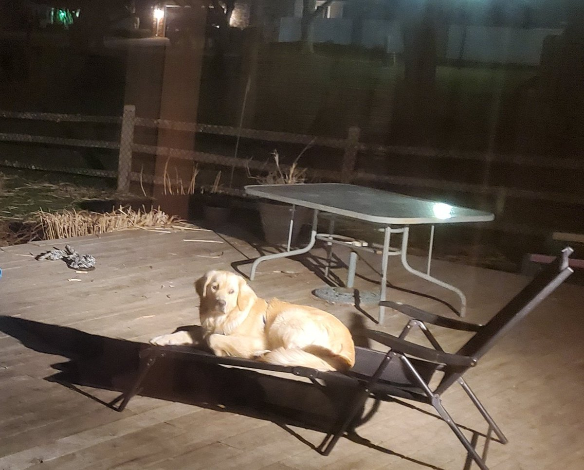 """Blue: """"I gotta get my ass up a friggin' 6:45 in the morning to have any shot at this lounge chair -- 'these people' who live here aren't willing to share worth a damn at all during 'prime time' hours""""...""""tsk..tsk..tsk...woof...woof...woof"""" #goldenretrieverspic.twitter.com/BExj0zwU6M"""