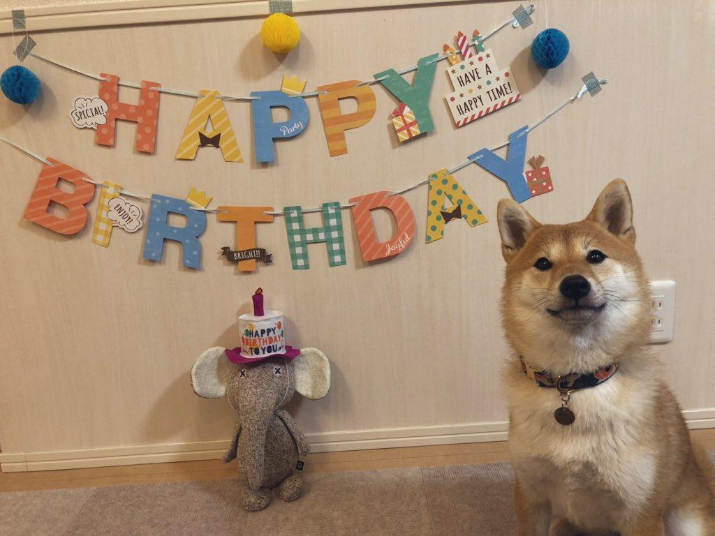 祝1歳 今日に至るまで本当に本当に 色々な出来事がありました。。。 いま思い返せばどれもいい思い出です  そしてこれからも 変わらず元気で側に居てね あと20年は生きてくれないと困る笑  #柴犬 #柴犬は世界を癒す  #犬好きな人と繋がりたい  #犬のいる暮らし  #お誕生日pic.twitter.com/O1N4sleUU9