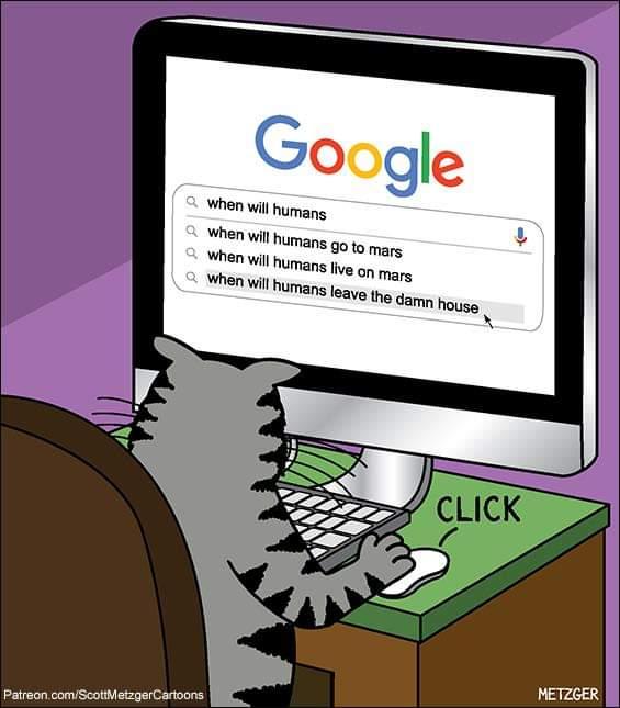 Parce qu'en ces temps de pandémie, il faut essayer de sourire un peu... #ChatmediDeRire #Caturday #Chats #Cats #Humour #Lolcat pic.twitter.com/fM3jyg9fAh
