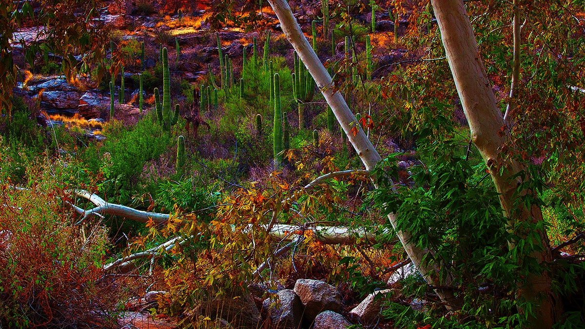 Sabino Canyon in Arizona - have a safe day.... #theforestcommonground #photography #landscapes #photo #art #US #Arizona #landscapephotography #albertaphotographer #canyon #hiking #beautiful #nature #naturelovers #cactus #desert #morningpic.twitter.com/YAmSrGgjSX