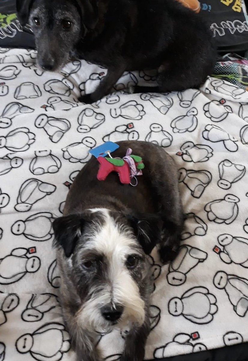 "Introducing these two beautiful honorary hounds4huntingtons Thanks Michelle they're adorable and sensibly staying  at home xxx ""Jack And Patty Chilling With Sybil. Xxxx"" #sybilontour raising awareness of #Huntingtonsdisease x <br>http://pic.twitter.com/U3NjXfcoNk"