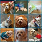 """Image for the Tweet beginning: Some of our """"fur""""-loughed #therapydogs"""