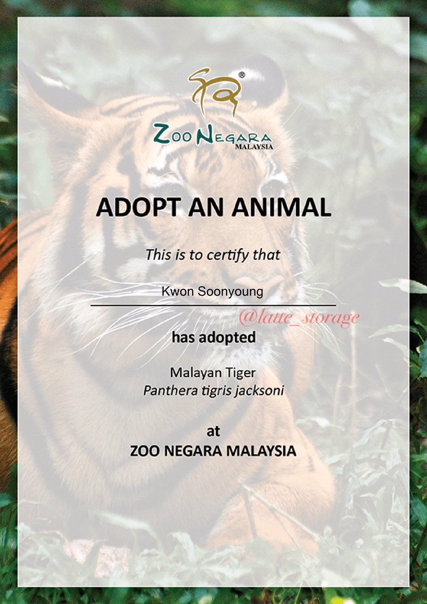 Zoo Negara needs fund to maintain the well being of the animals and sustain the zoo's operation. They relies on ticket sales, edu programs and donations. Today, we decided to step in and adopts Kayla the Malaysian Tiger under Hoshi's name  호랑해!  #StrongerTogether <br>http://pic.twitter.com/pRFtIRO4k1