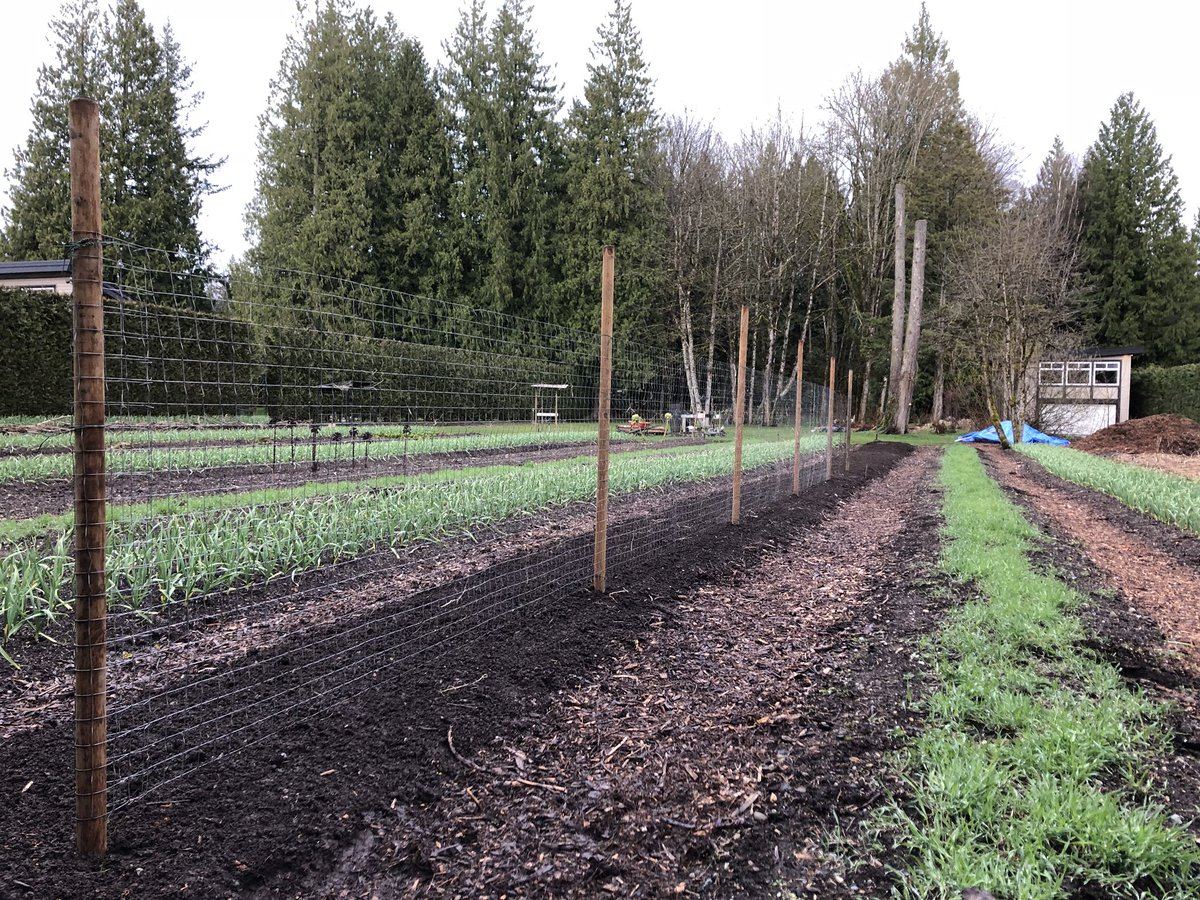 The #pea fence is up (50' this year)! Now if only the weather would warm up a bit!  #smallfarm #farmdirect #local #natural #mapleridge #food #vegetables #farm #garden #bcbuylocal #bcfarmfresh #supportlocal https://t.co/F76sMDctVe