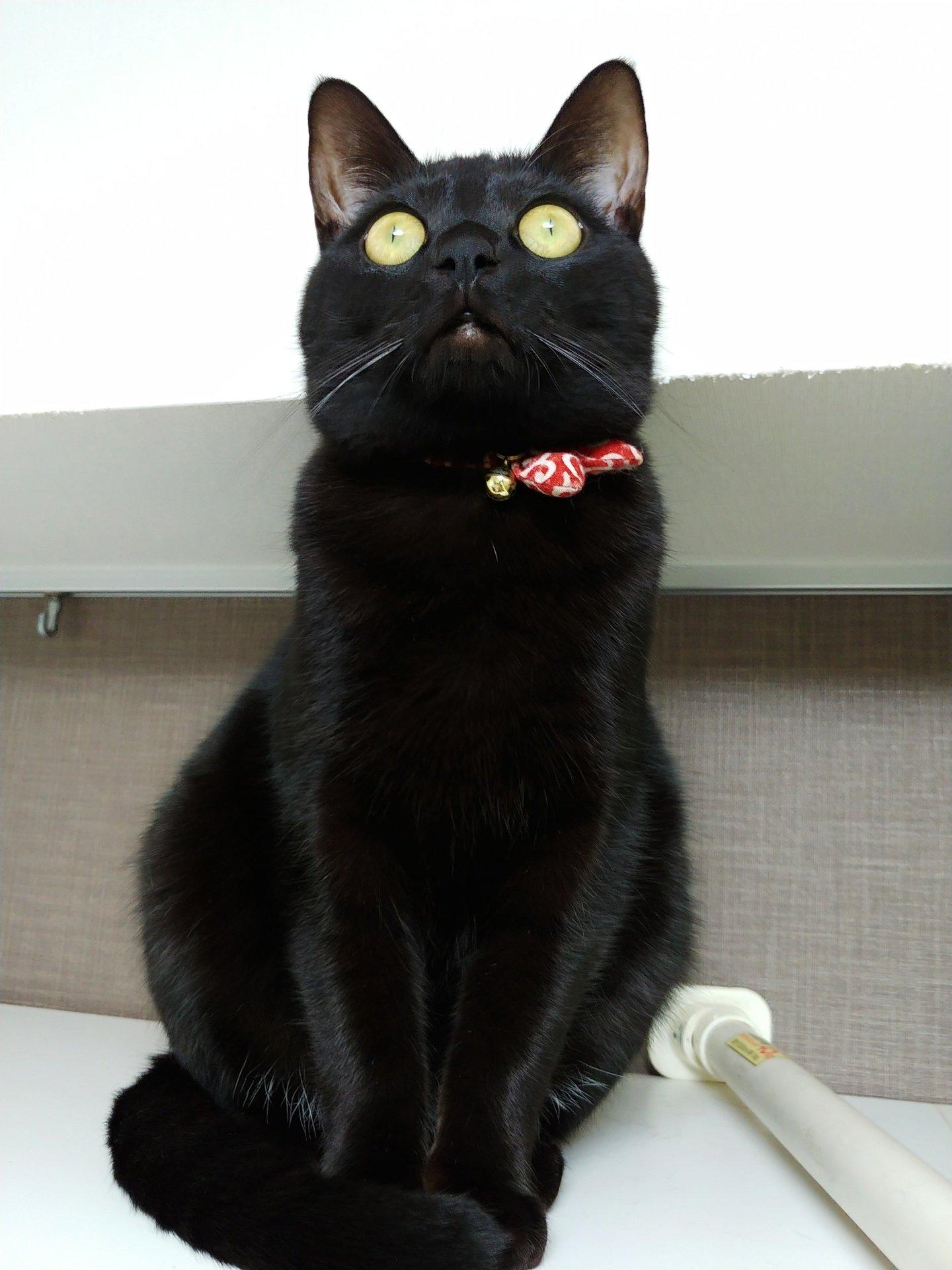 可愛いけどちょっと怖い? !虫を見つけた時に宇宙と交信しているような顔になる猫! !