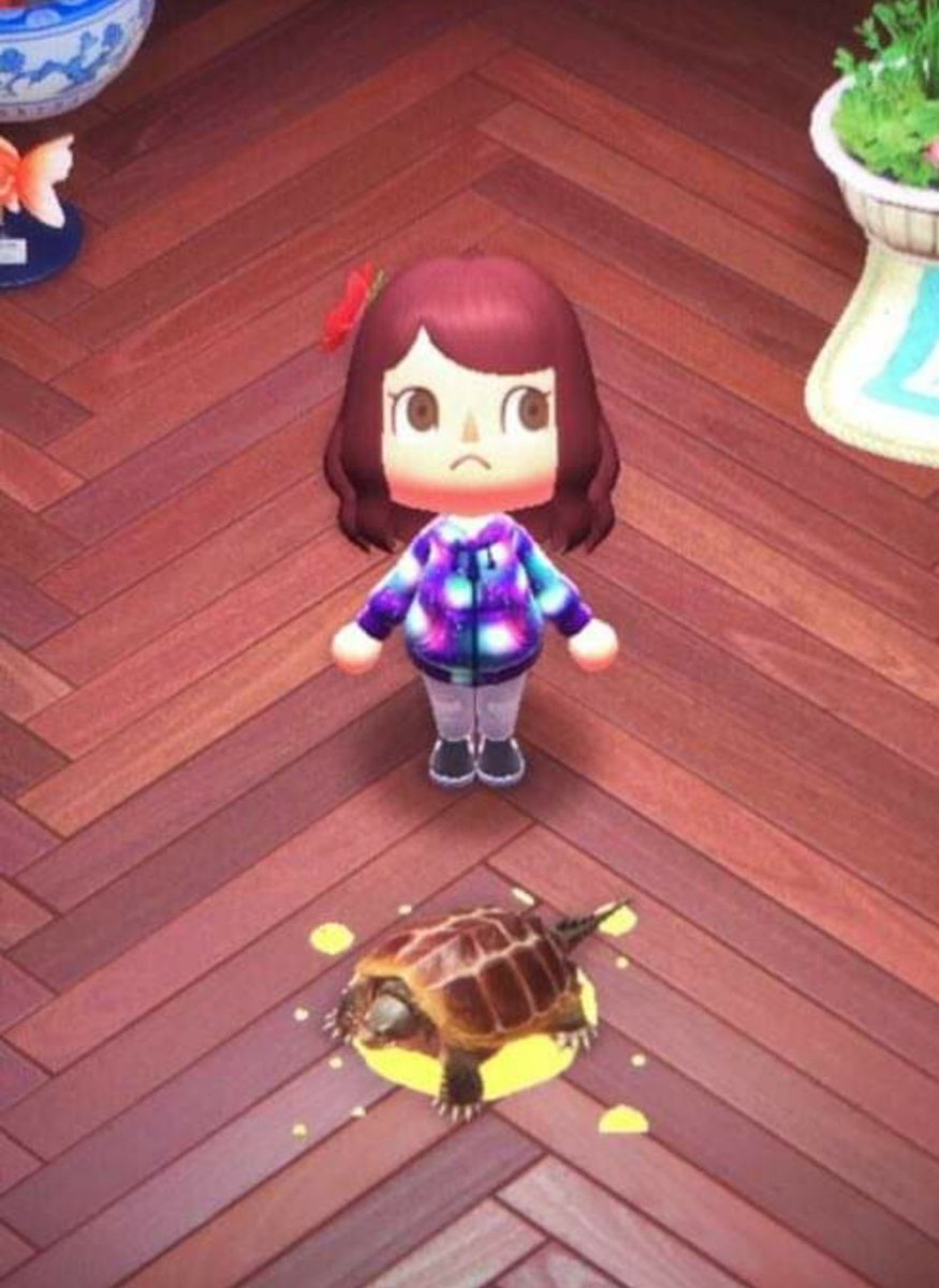 Circletoonshd On Twitter My Girlfriend Has A Pet Snapping Turtle In Animal Crossing Named Charles And She Just Sent Me This